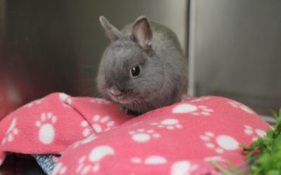 Gut Stasis in Rabbits